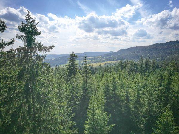 Stezka korunami stromů, Lipno, Šumava